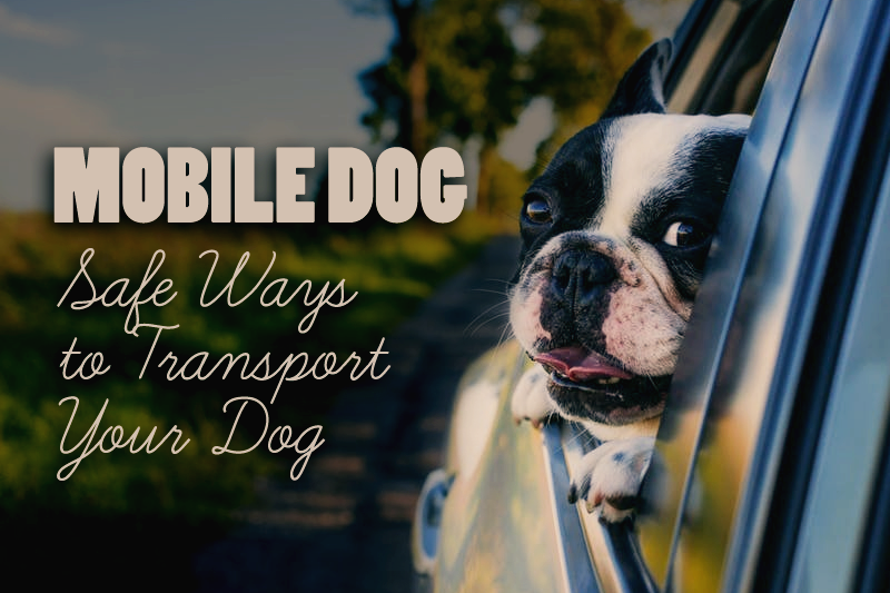 Mobile Dog: Safe Ways Transport Your Dog